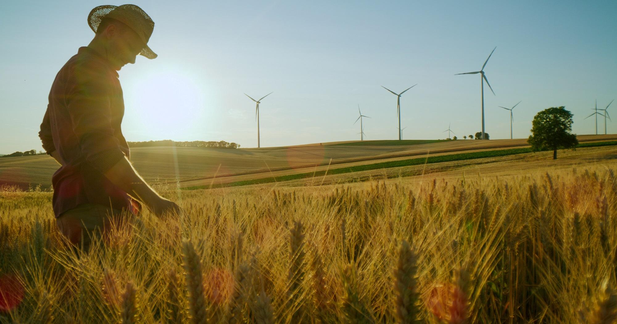 farmer in the grain field