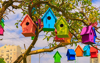 Bird feeders on the tree