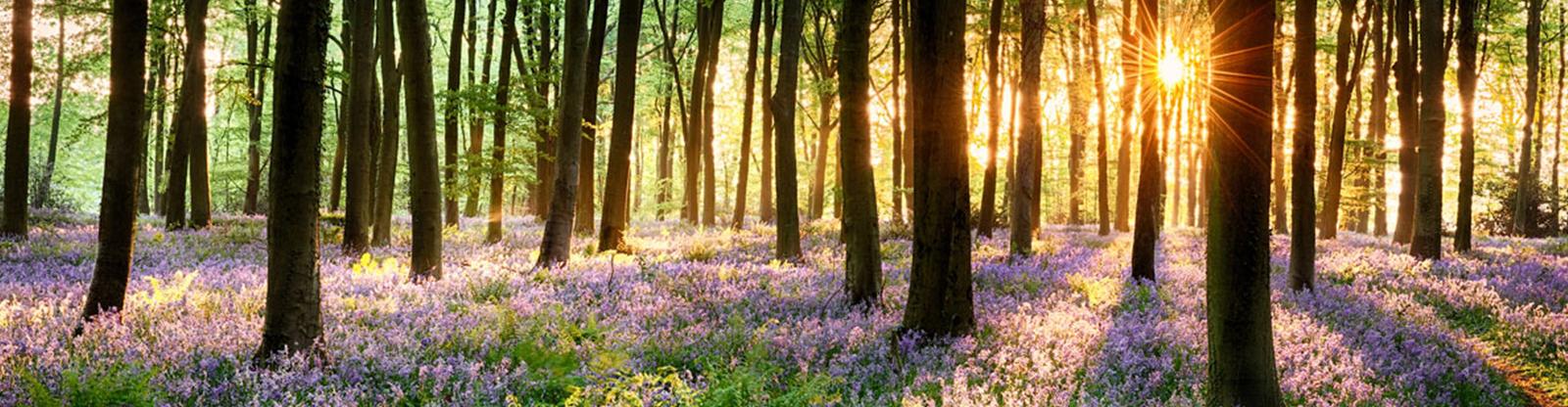 Woodland with sun